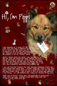 Pippi the Therapy Dog - Shelter Dogs to Dream Dogs
